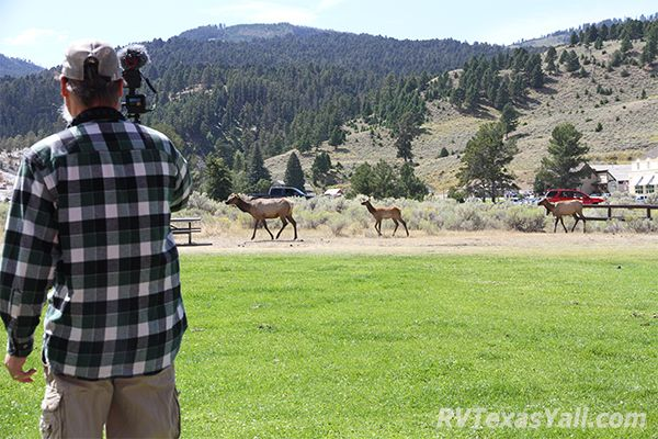 Watching Elk