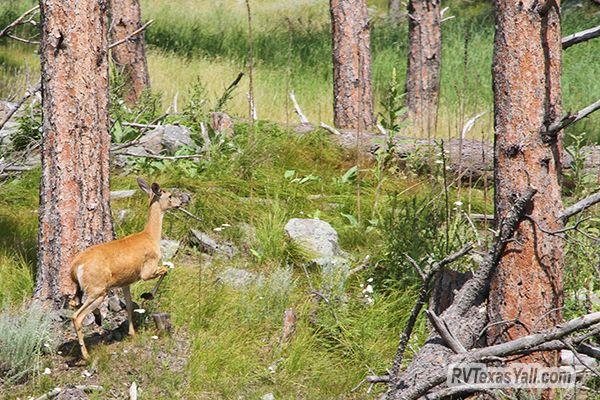 Trackside Wildlife