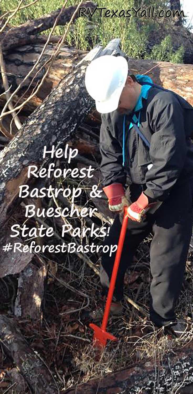 Help Reforest Bastrop and Buescher State Parks, Bastrop TX ...