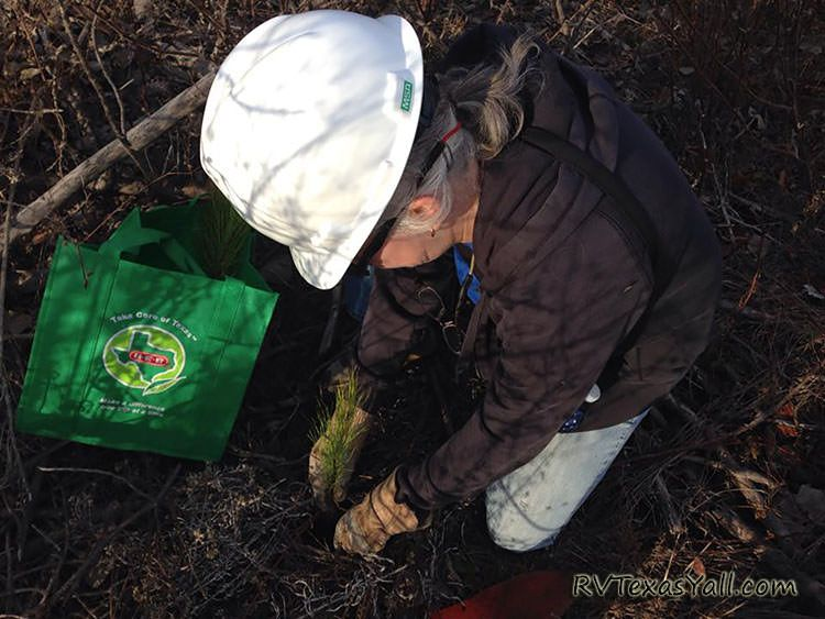 Reforesting Bastrop One Tree at a Time