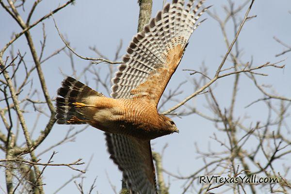 Great Birdwatching
