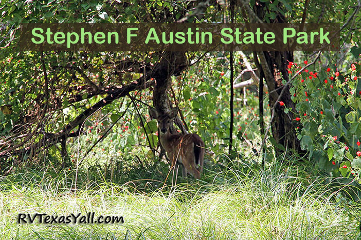 Stephen f austin state park san felipe tx - Independence rv winter garden florida ...