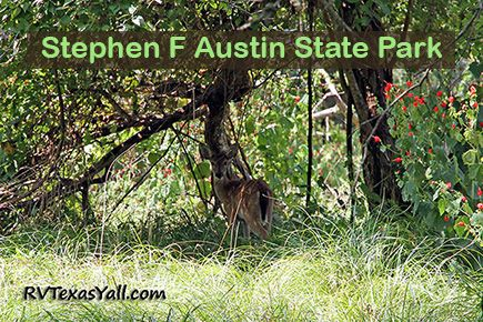 Stephen F Austin State Park